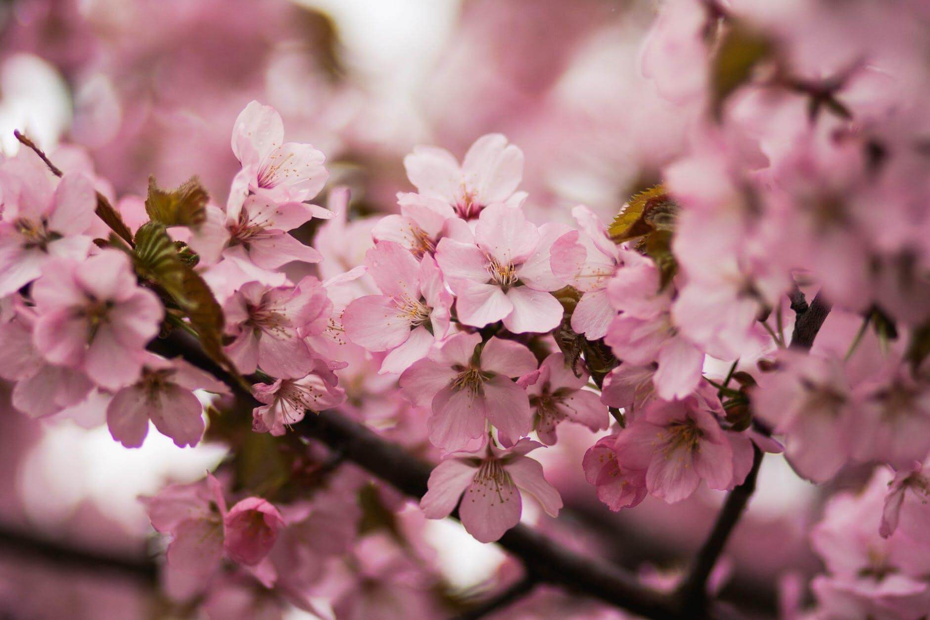 Wonderful blossoms that make your affection step ahead